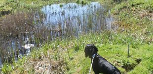 Dog near pond