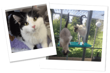 Boutique Cattery - Brandesburton, East Yorkshire